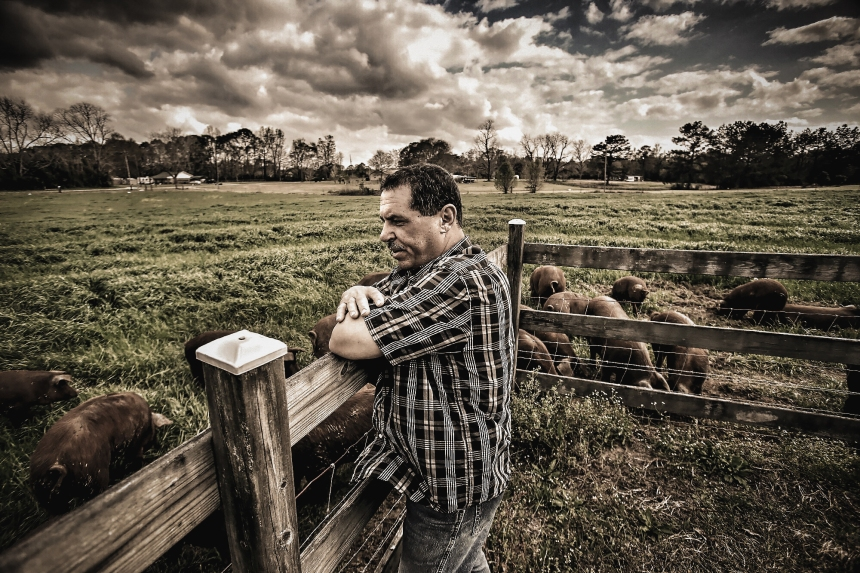 Dale Stevens looks out over one of his pastures where his red wattle pigs forage and romp at Sand Ridge Farm outside of Lucedale. Stevens raises his pigs free range and on an all-natural diet.